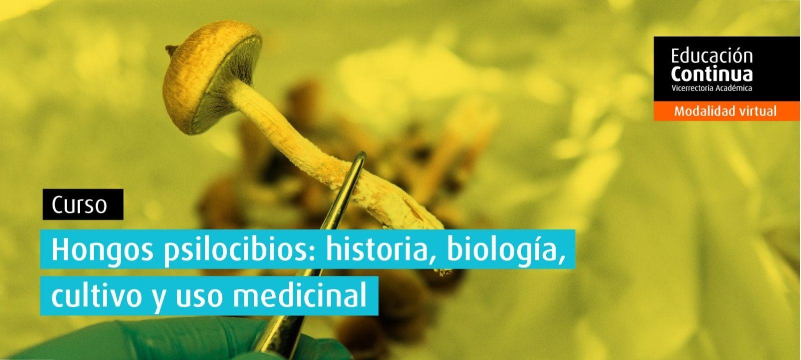 Curso virtual | Hongos psilocibios: historia, biología, cultivo y uso medicinal