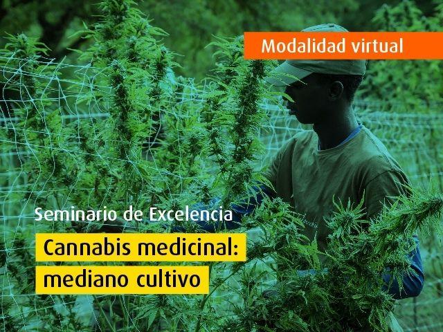 Curso virtual | Cannabis medicinal: mediano cultivo