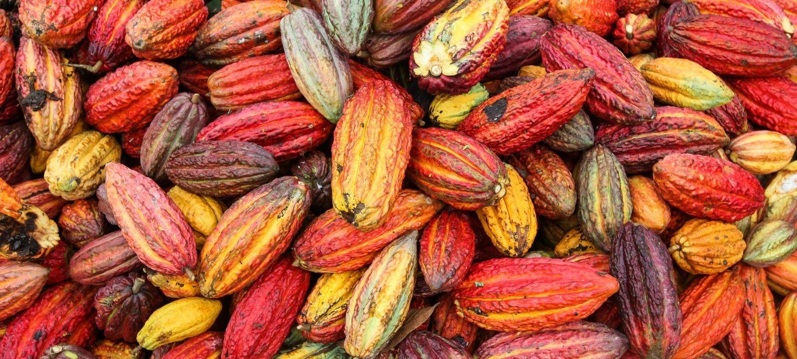 Bionanotecnología para la calidad del cacao colombiano