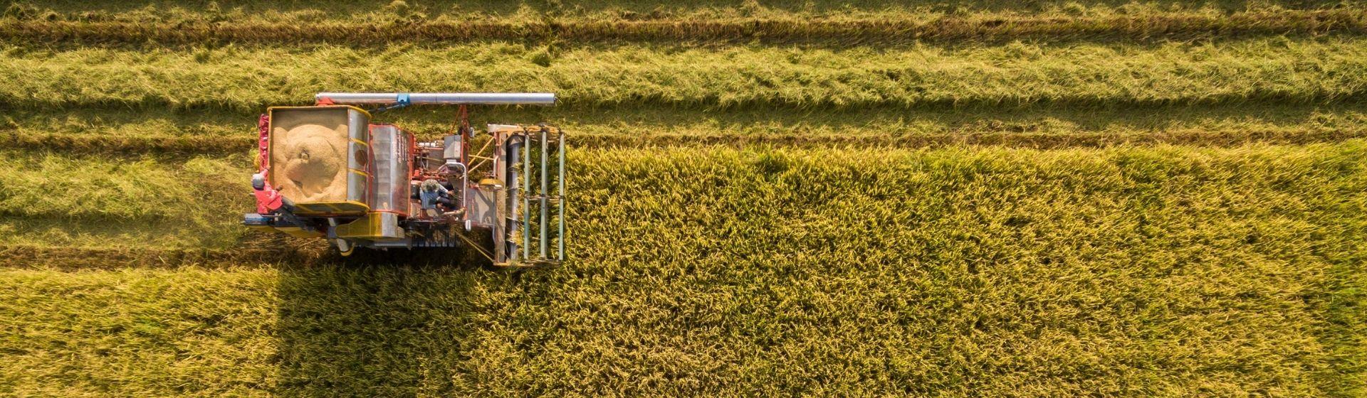 Genética del siglo XXI para el agro colombiano en cultivos de arroz