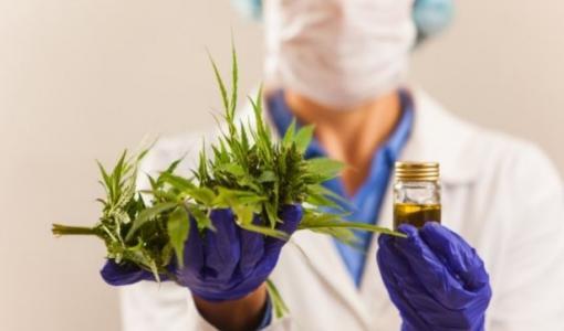 Curso virtual   Cannabis medicinal: poscosecha, extracción y análisis